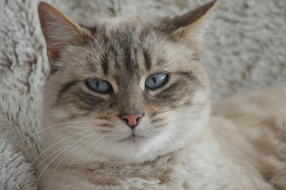 Katzen-Nahrungsergänzung & Co.