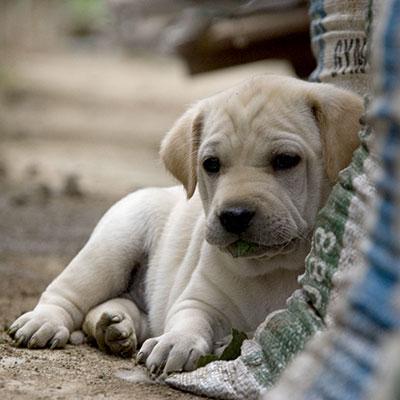Hunde-Naßfutter