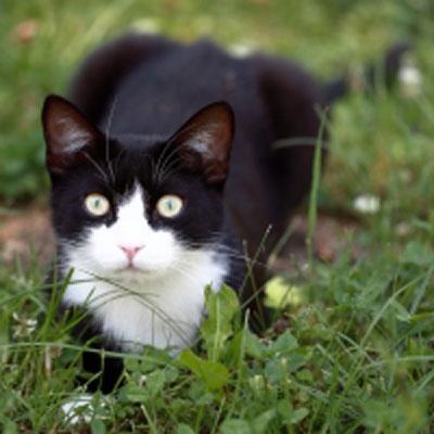 Katzen-Naßfutter
