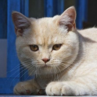Katzen-Trockenfutter