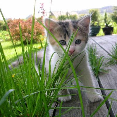 Katzensnacks