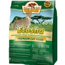 Wildcat Etosha