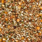 Beyers Nr.45 Rassetauben mit Mais