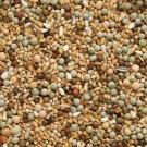 Beyers Nr.46 Rassetauben ohne Mais